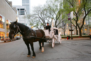 Chicago Horse & Carriage Ride