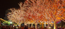 Go Chicago Holiday Attractions Pass